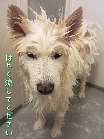エアお洗濯_c0062832_16303200.jpg