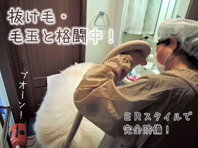 エアお洗濯_c0062832_16310072.jpg