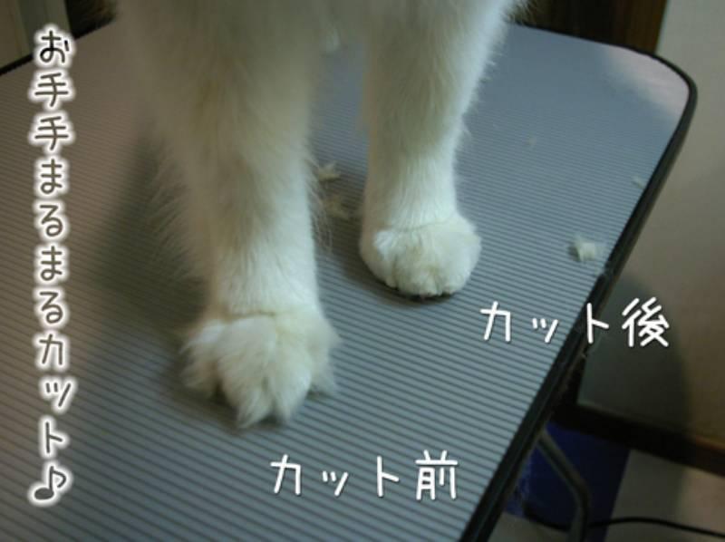 エアお洗濯_c0062832_16310167.jpg