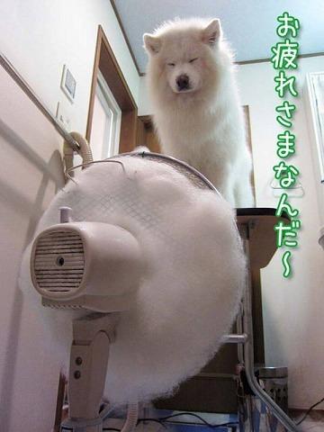エアお洗濯_c0062832_16314929.jpg
