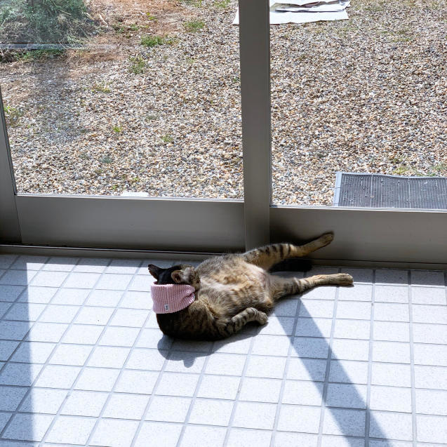 猫玄関も大人気_d0355333_23240243.jpg