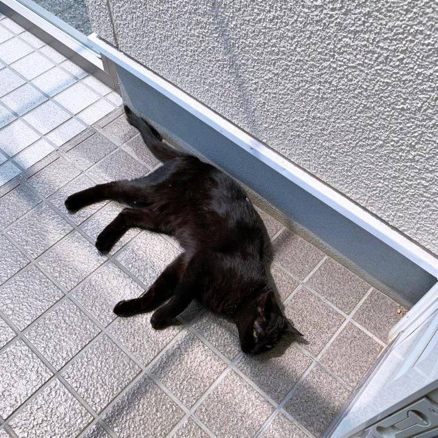猫玄関も大人気_d0355333_23243402.jpg