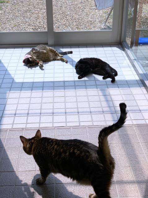 猫玄関も大人気_d0355333_23243508.jpg