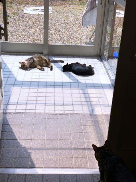 猫玄関も大人気_d0355333_23243755.jpg