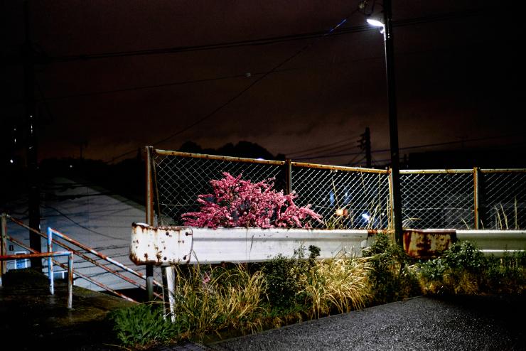 夜の散歩(3cut)_e0342136_18174416.jpg