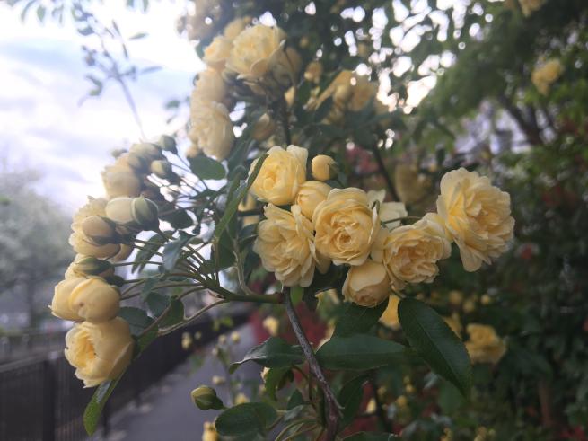 新芽の季節_c0076939_22211283.jpg