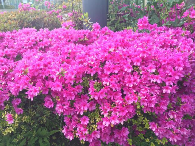 新芽の季節_c0076939_22214462.jpg