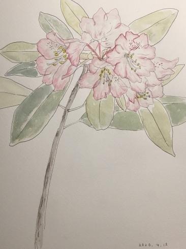 祖母の石楠花。_c0160745_22094640.jpeg