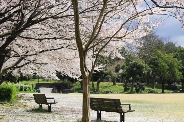 桜のじゅうたん_d0377645_22510455.jpg