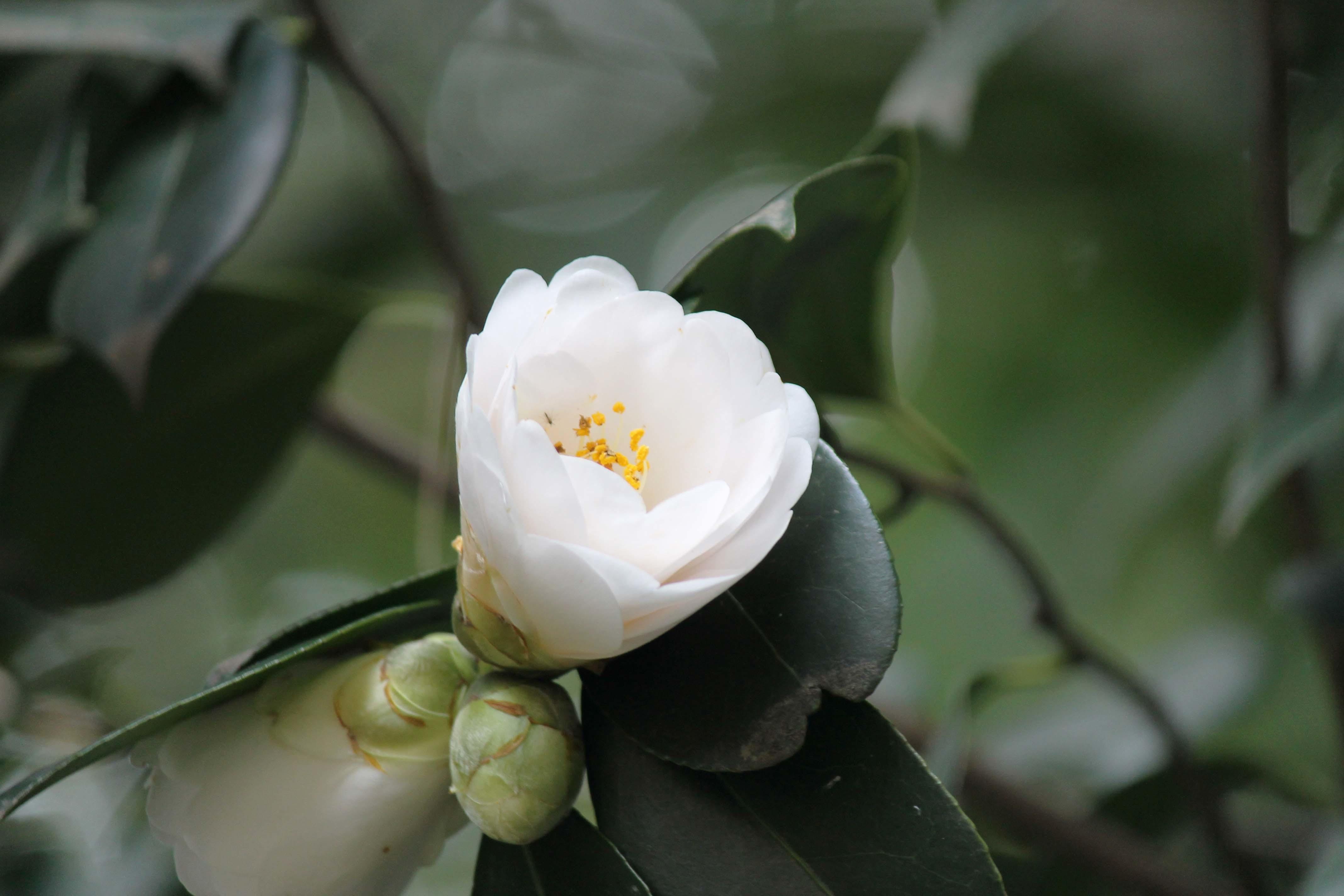 桜のじゅうたん_d0377645_22520632.jpg