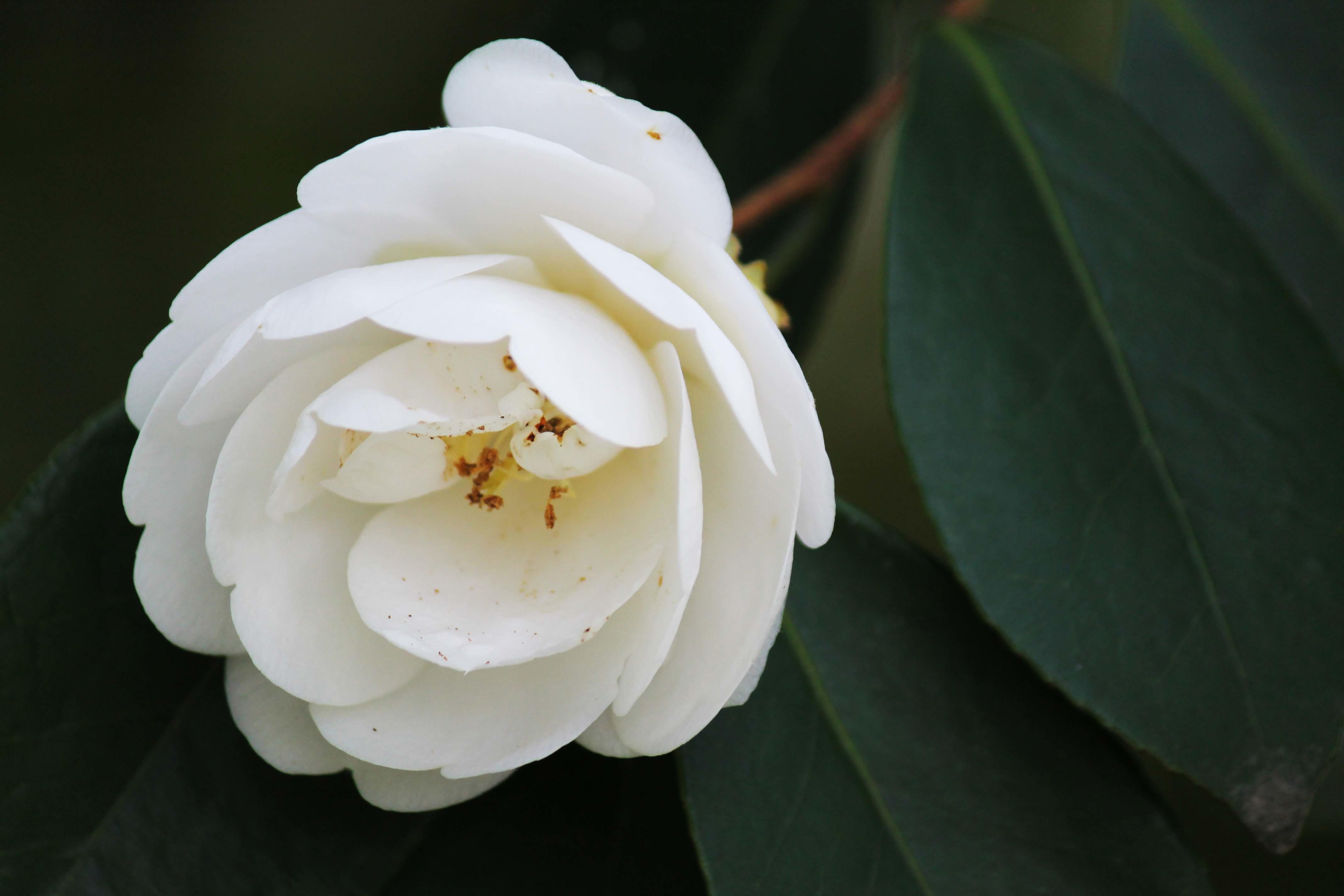 桜のじゅうたん_d0377645_22521038.jpg