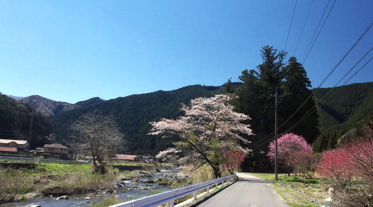 桜前線を追いかける_c0217255_07383684.jpg
