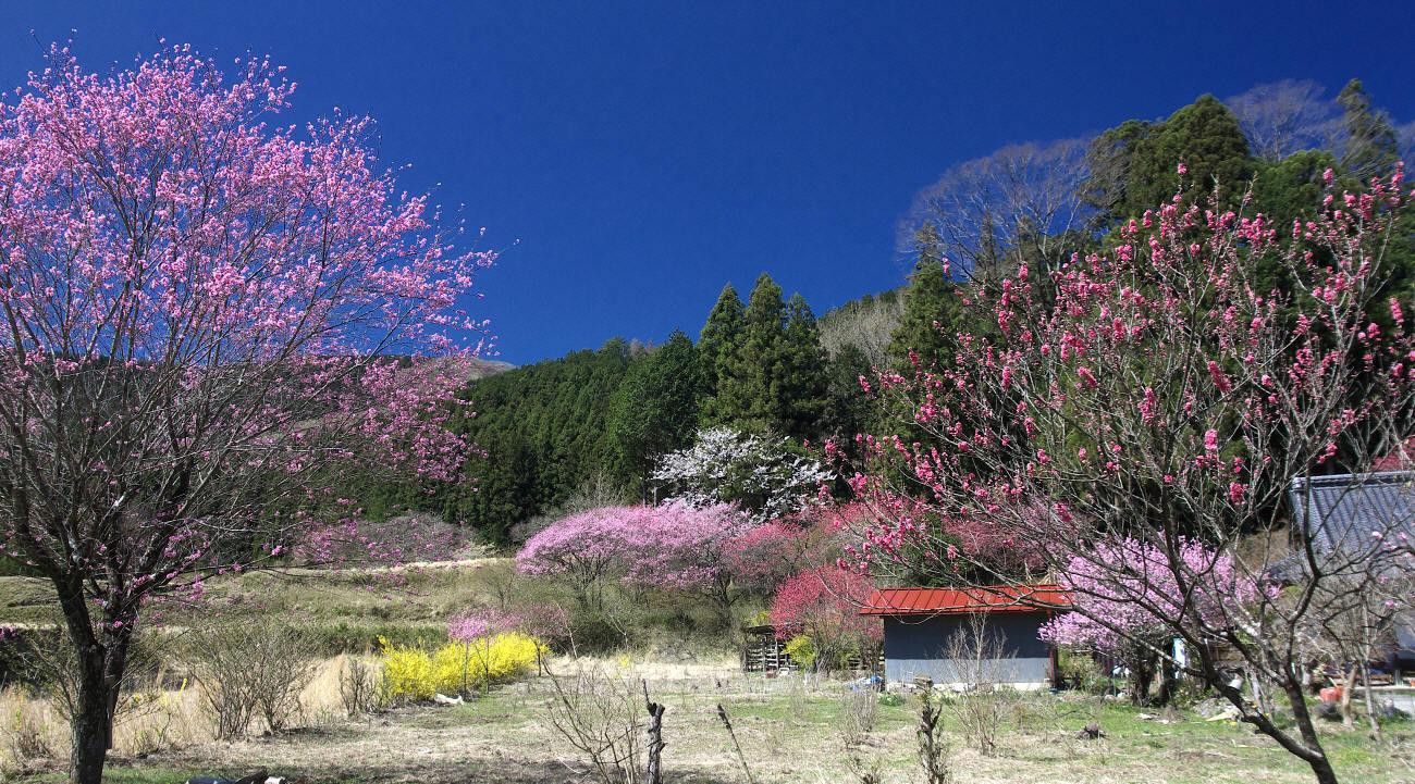 桜前線を追いかける_c0217255_07383847.jpg