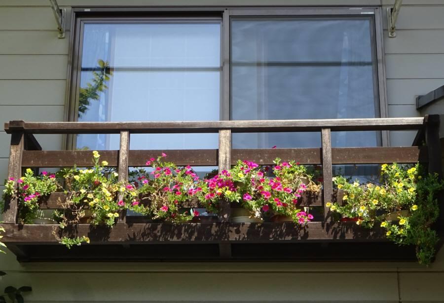庭の花 春その5_f0059673_23400599.jpg