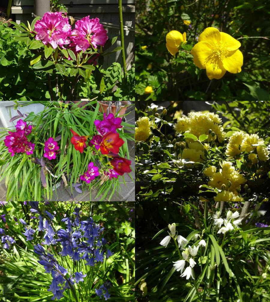 庭の花 春その5_f0059673_23410159.jpg