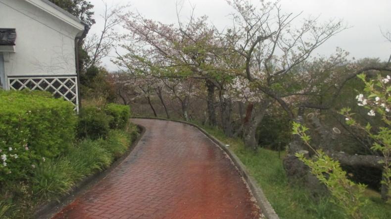 朝の散歩_d0389085_13571145.jpg