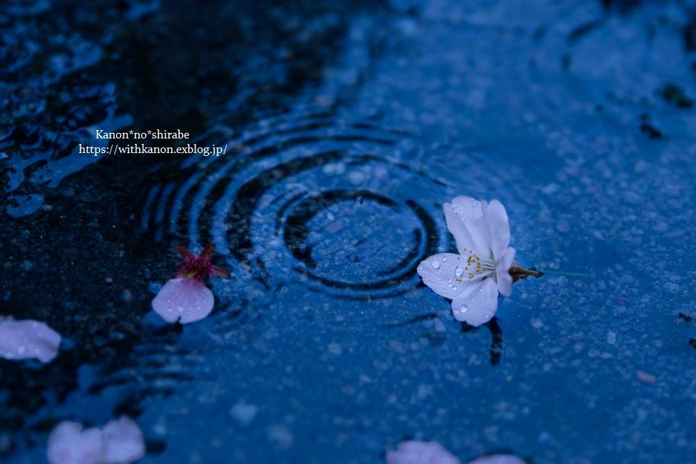 桜雨①_d0148187_20281407.jpg