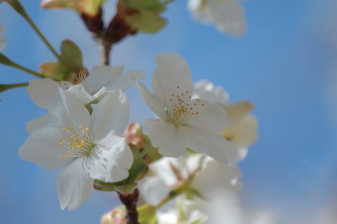 春なのに_b0324291_12324163.jpg