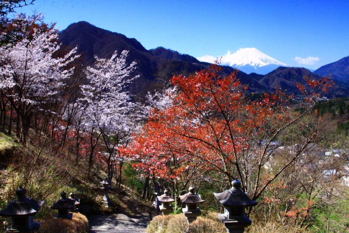令和2年4月の富士 (6) 真木お伊勢山の桜と富士_e0344396_15482378.jpg