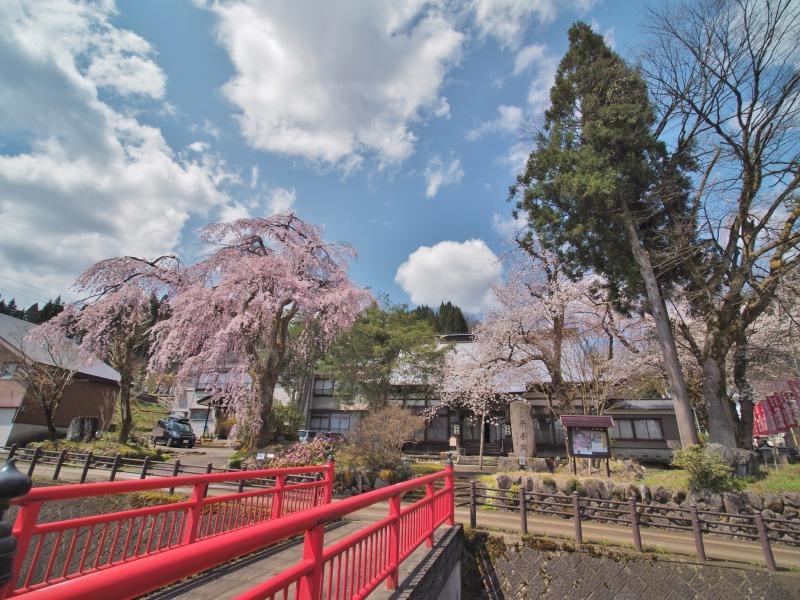 枝垂れ桜 昨日は9分咲きか ⑥_c0336902_20263359.jpg