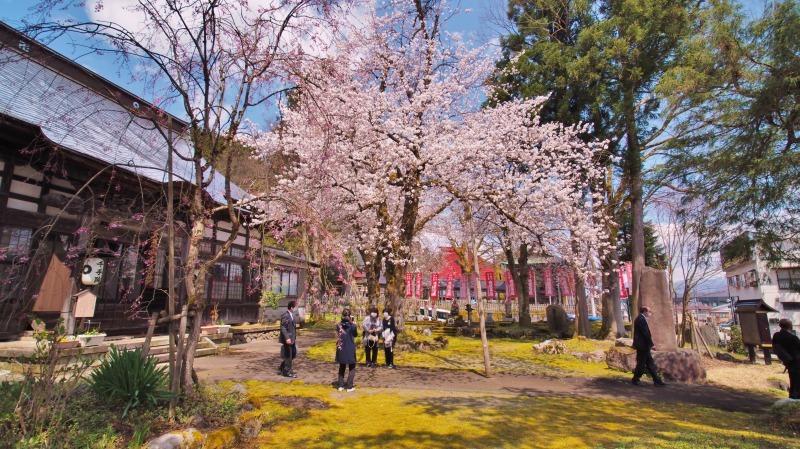 枝垂れ桜 昨日は9分咲きか ⑥_c0336902_20265691.jpg