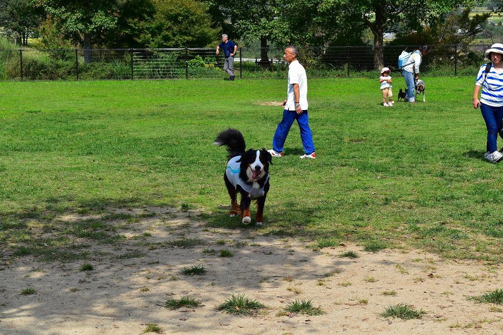 「KUMAMOTO犬フェス〜犬力あげちゃおう!〜」_f0174419_20142752.jpg