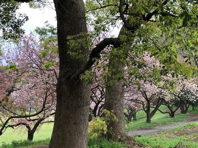 春を愛でる_f0101220_10460843.jpg