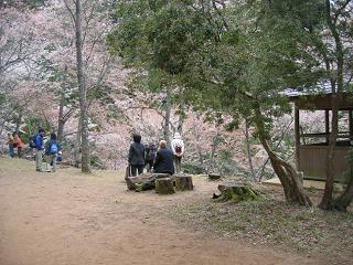吉野山 奥千本の桜が咲いてきました!_e0154524_08384502.jpg