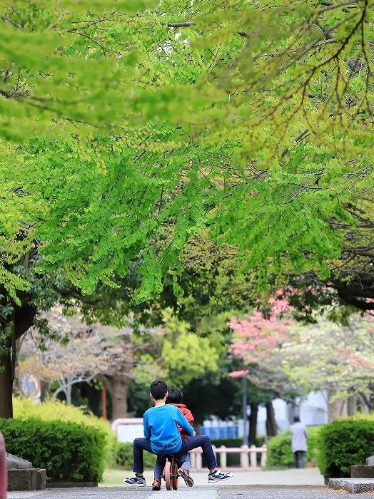 近所の春(2)_f0348831_18010755.jpg