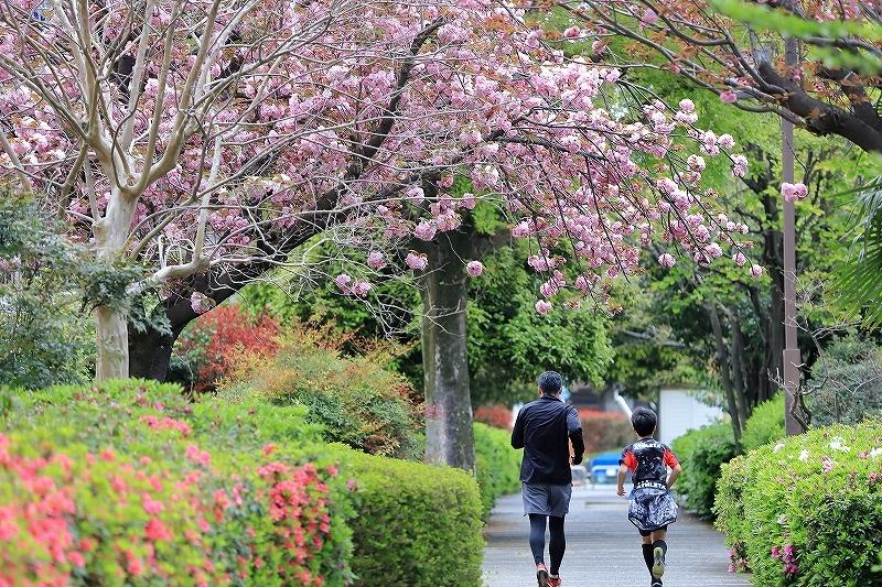 近所の春(2)_f0348831_18013828.jpg