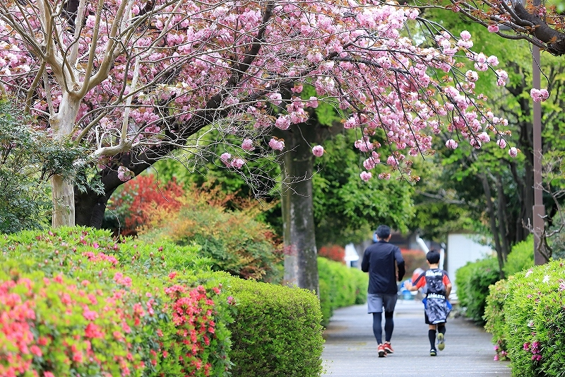 近所の春(2)_f0348831_18014251.jpg