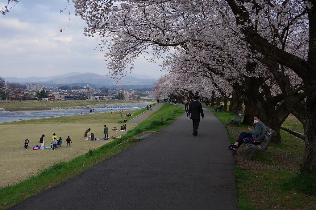 犀川べりの桜満開_d0043136_22074591.jpg