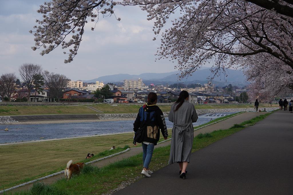 犀川べりの桜満開_d0043136_22084744.jpg