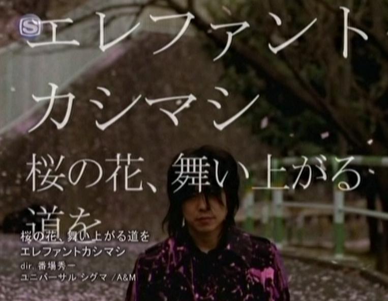 桜のじゅうたん_d0377645_09064056.jpg