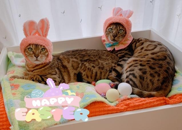 HAPPY EASTER! _c0006748_17254151.jpg