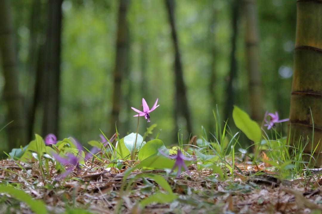 春の妖精_e0403850_16024730.jpg
