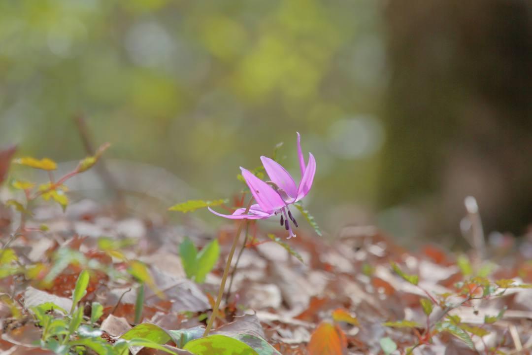 春の妖精_e0403850_16031713.jpg