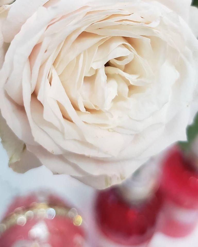 緊急事態宣言6日目 。。。 薔薇の雨降る夕暮れ時。。。。 *。:☆.。†。☆+_a0053662_22271784.jpg