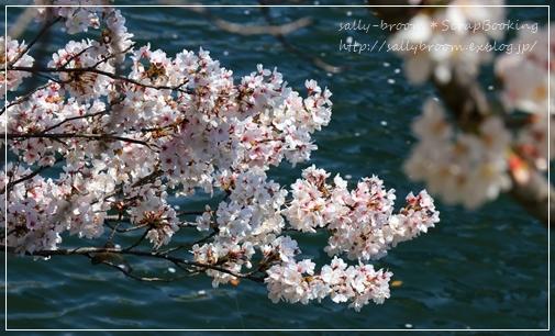 サクラサク*大阪城_d0132371_15130645.jpg