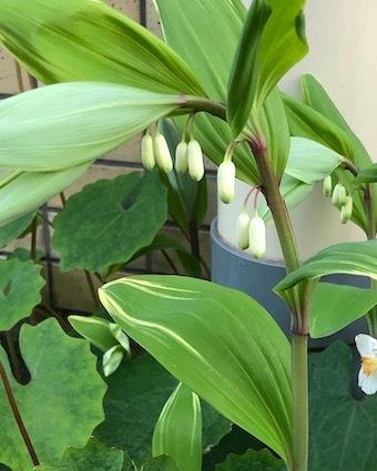 白き花に、、。_f0061394_10213186.jpg