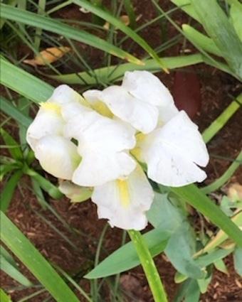 白き花に、、。_f0061394_10221628.jpg