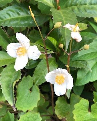 白き花に、、。_f0061394_10223125.jpg