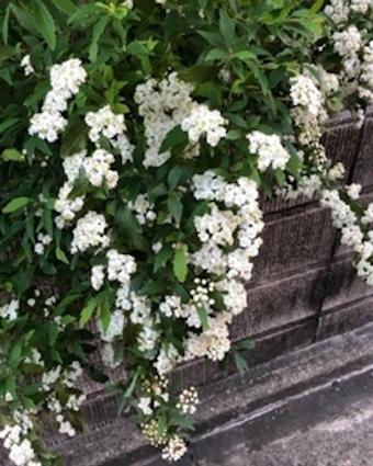 白き花に、、。_f0061394_10231185.jpg