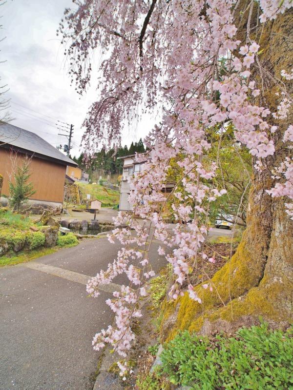 昨日は「お花見散歩」へ_c0336902_20535181.jpg