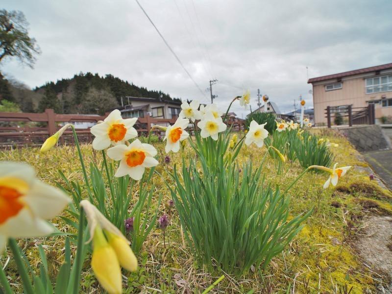 昨日は「お花見散歩」へ_c0336902_20542082.jpg