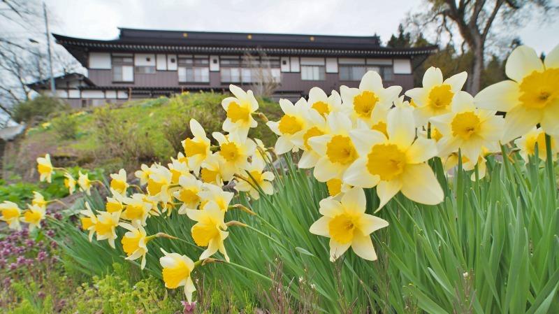 昨日は「お花見散歩」へ_c0336902_20542651.jpg