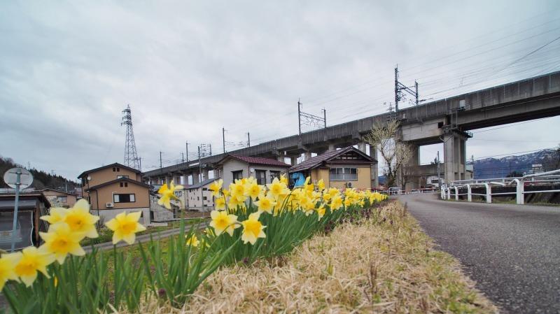 昨日は「お花見散歩」へ_c0336902_20542952.jpg