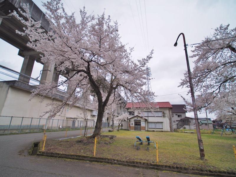 昨日は「お花見散歩」へ_c0336902_20554689.jpg
