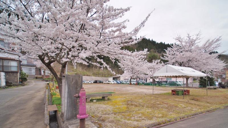 昨日は「お花見散歩」へ_c0336902_20555481.jpg
