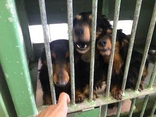 【犬猫・移動先募集】今は犬は2頭だけです(4/14訪問)_f0242002_10275996.jpg